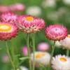 Munkalehetőség a Dália virágkertészetnél